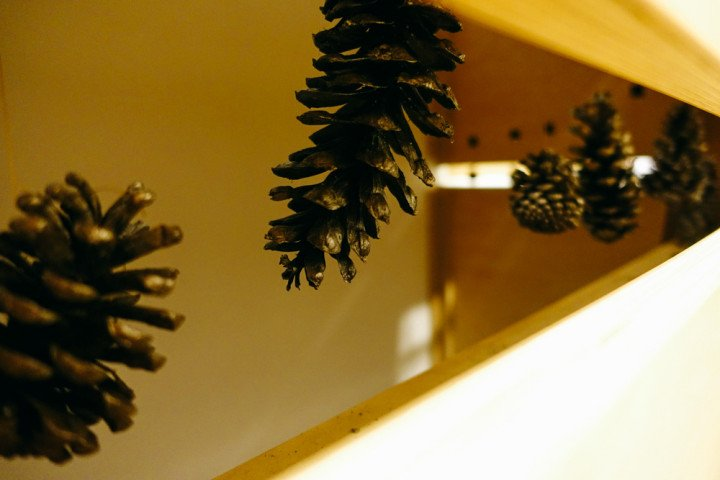 Update from The Builders - pinecones